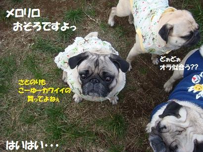 DSC08448_20110328004247.jpg
