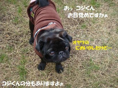 DSC08484_20110328012111.jpg