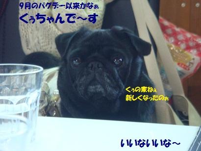 DSC08619_20110329000033.jpg