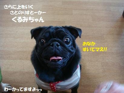 DSC08629_20110329000041.jpg