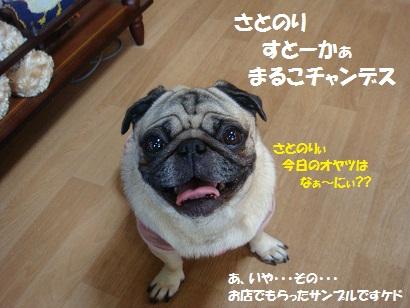 DSC08633.jpg