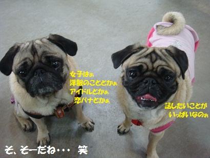 DSC08681.jpg