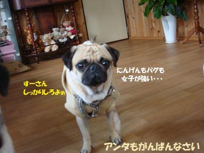 DSC08732_20110331015022.jpg