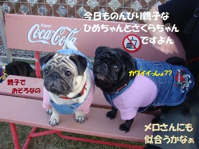DSC08856_20110413032604.jpg