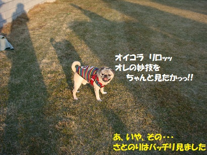 DSC08882_20110413025238.jpg