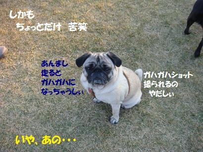 DSC08888_20110413033617.jpg