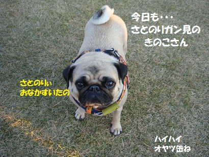 DSC08892_20110413020909.jpg