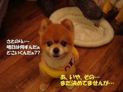 DSC09220_20110420202147.jpg