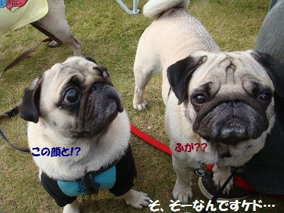 PMBS4103_20110222045523.jpg