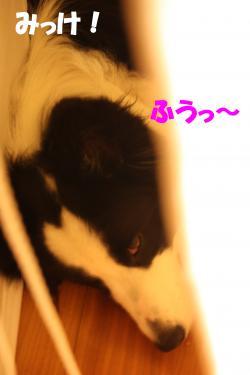 20090713_12.jpg