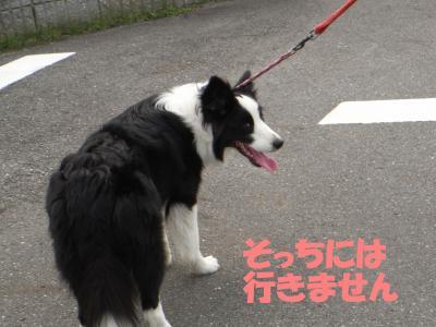 20090715_1