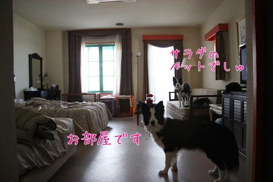 2011012936.jpg