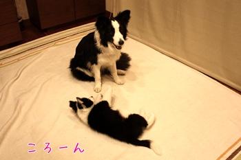 20110325く