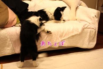 20110325こ