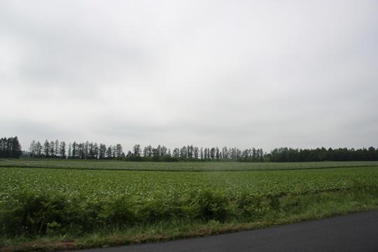 2011HokkaidoO13.jpg
