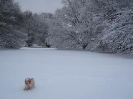 雪の風景2