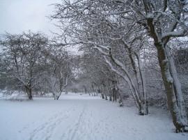 雪の風景3