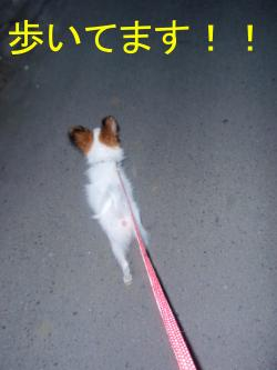 散歩で歩いた
