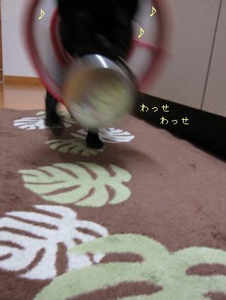 IMG_20110220__01.jpg