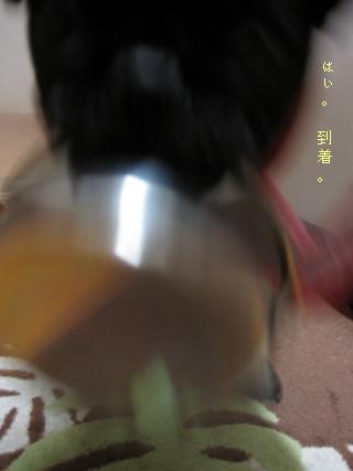 IMG_20110220__03.jpg