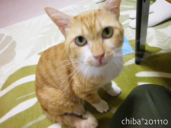 chiba11-10-116.jpg