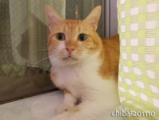 chiba11-10-137.jpg
