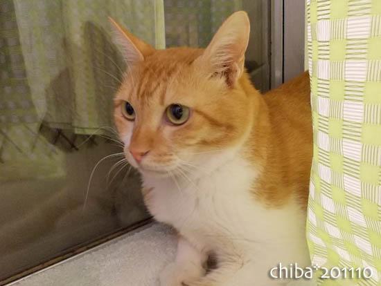 chiba11-10-138.jpg
