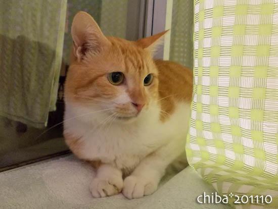 chiba11-10-139.jpg