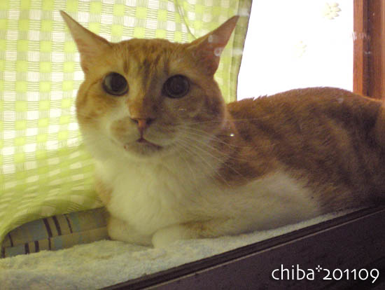 chiba11-9-155.jpg