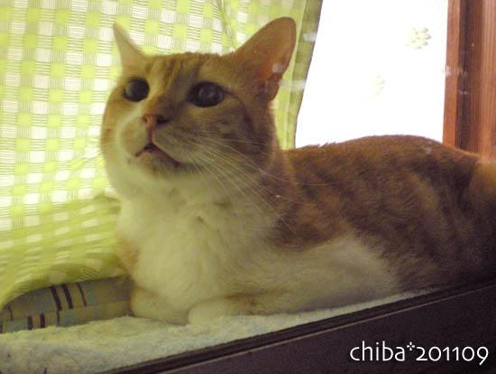 chiba11-9-156.jpg