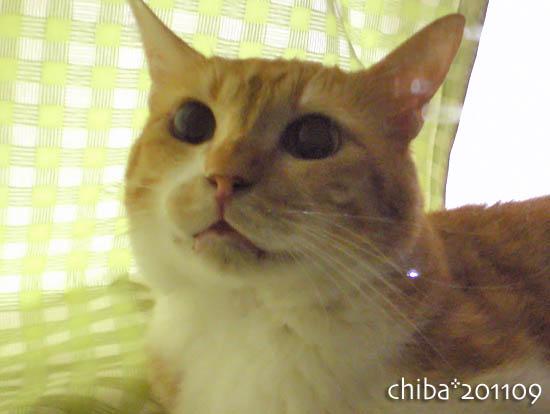 chiba11-9-157.jpg