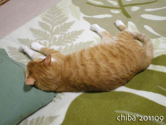 chiba11-9-171.jpg
