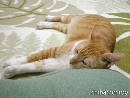 chiba11-9-172.jpg
