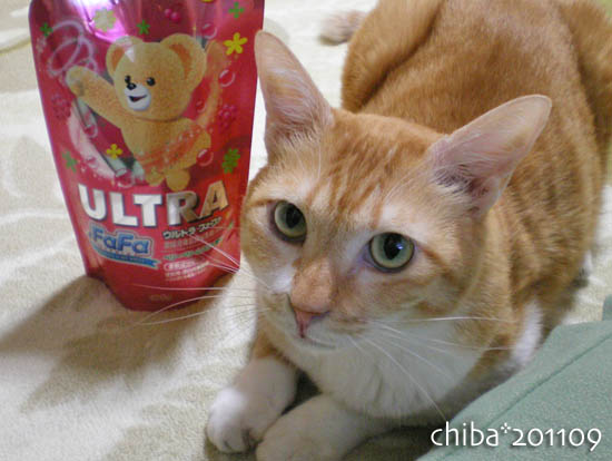 chiba11-9-182.jpg