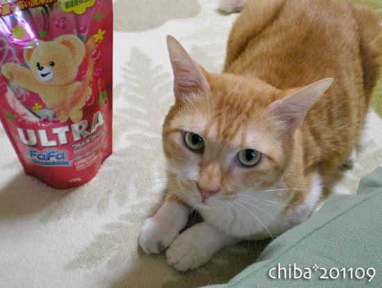 chiba11-9-183.jpg