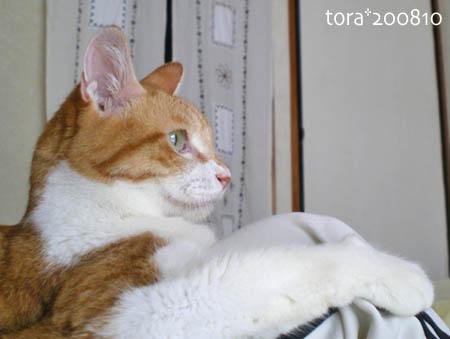 tora08-10-41s.jpg