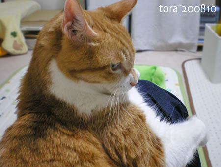 tora08-10-55s.jpg