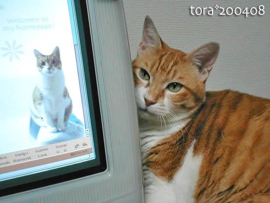 tora11-10-03.jpg