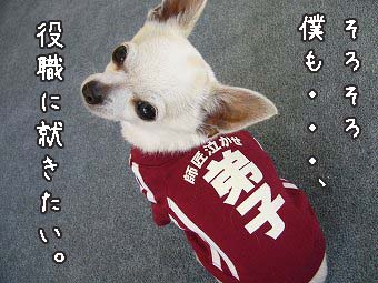 yakusyoku copy