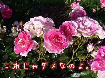 s-P1300938 copy