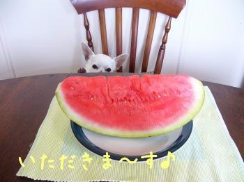 s-P1190679.jpg