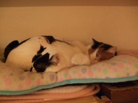 DSCF9272猫団子