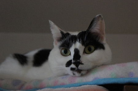 DSC00037ぷ~ちゃん猫ベッド