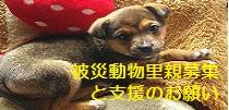 犬猫救済の輪