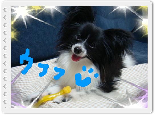 編集_DSC04634