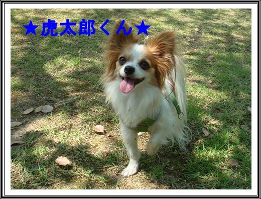 DSC04885.jpg