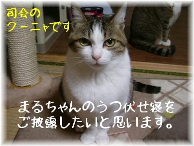 司会役クーニャ