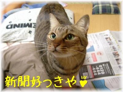 新聞好っきや!