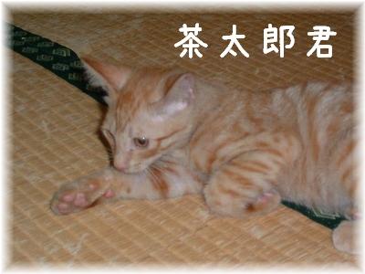 北九州茶太郎君
