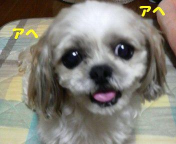 2008071720460001.jpg